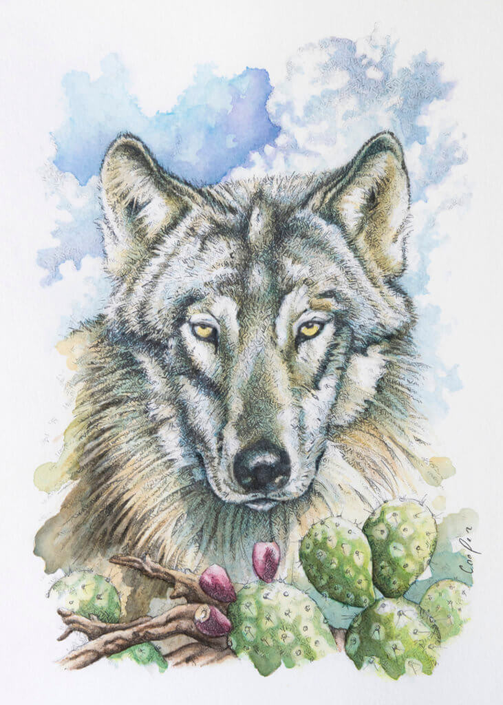 """Gray Wolf"" , 11"" x 14"" watercolor painting, by Brad Cooper from Cooper Design Studio"