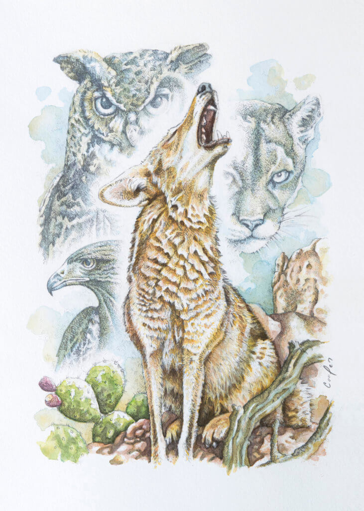 """Howling Coyote"" , 11"" x 14"" watercolor painting, by Brad Cooper from Cooper Design Studio"